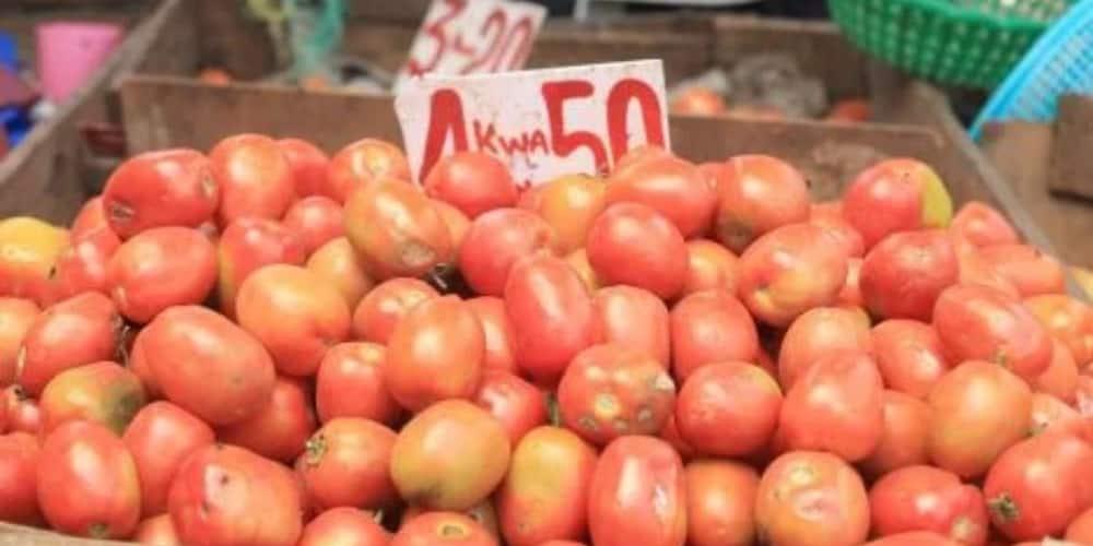 Kajiado: Tomato Prices Rise by Over 50% as Tanzania Retaliates Maize Exportation to Kenya Ban