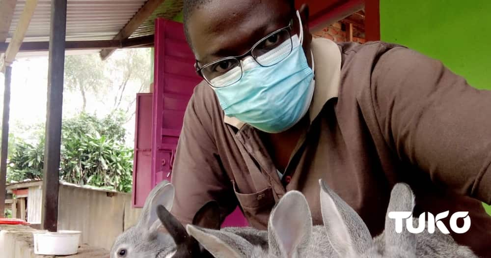 Rabbits' gestation period is approximately between 28-31 days. Photo: Robson Sitati.