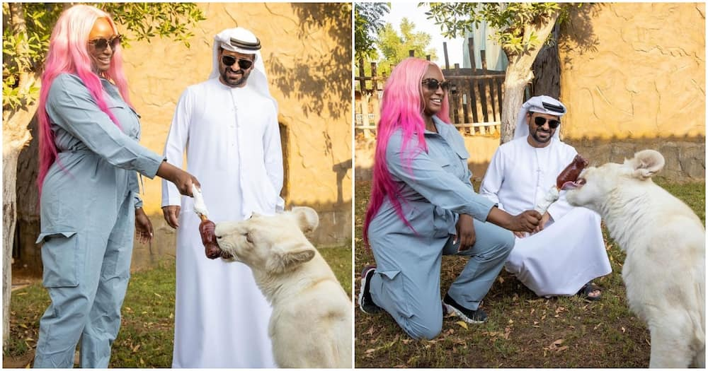 DJ Cuppy pays a visit to pet lion cub named after her in Dubai
