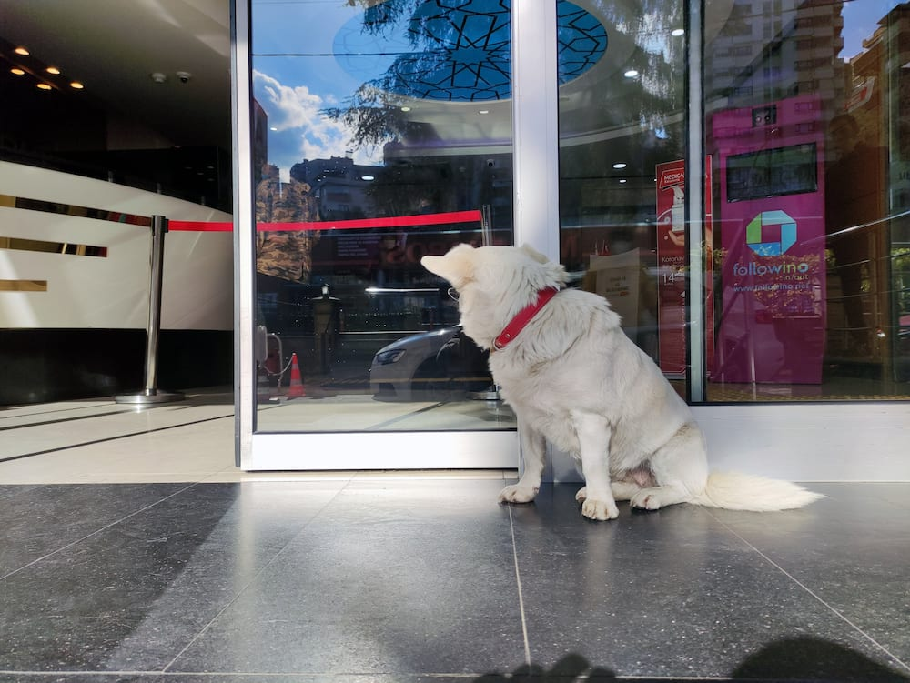 Sweet dog stands outside hospital for 6 days till owner is discharged
