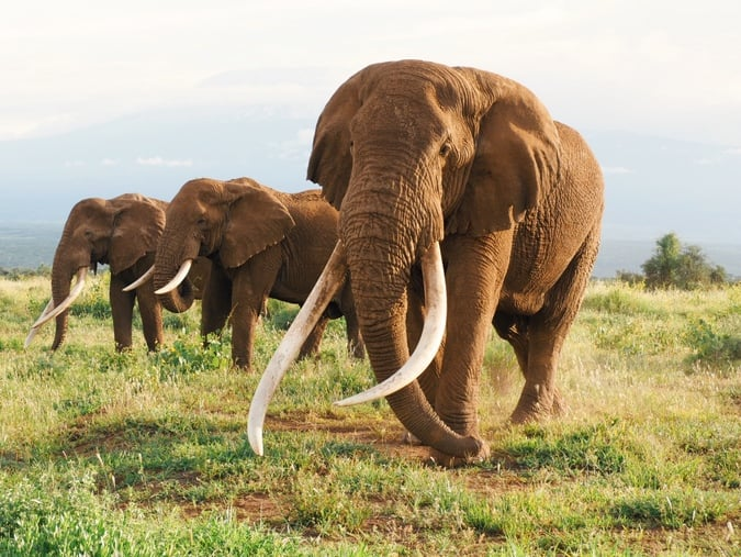 Detectives arrest man wanted by US over ivory trade at Mombasa airport