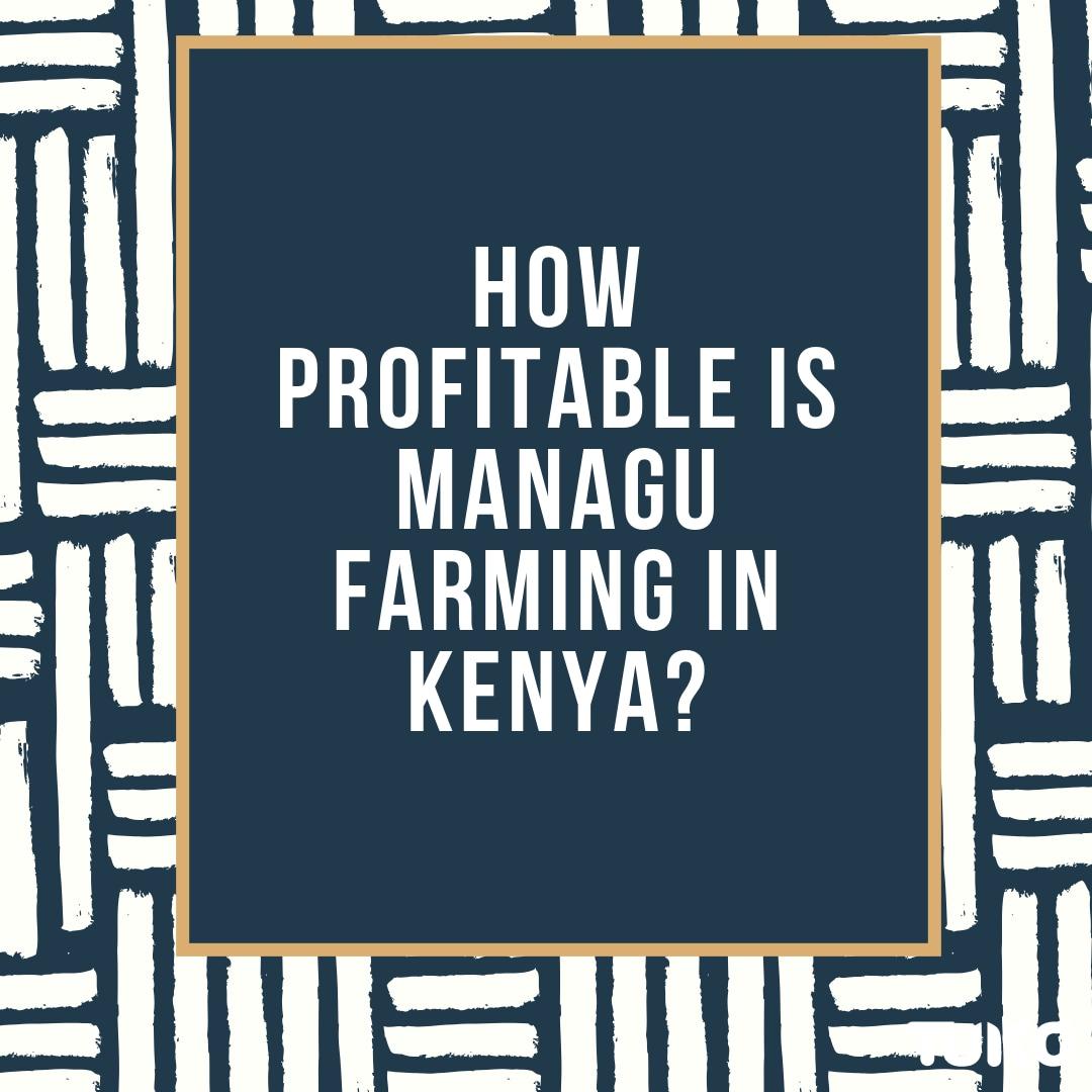 Managu farming in kenya