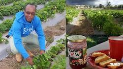 Side hustle: 33-year old Nakuru man minting KSh 200k per month from strawberry farming
