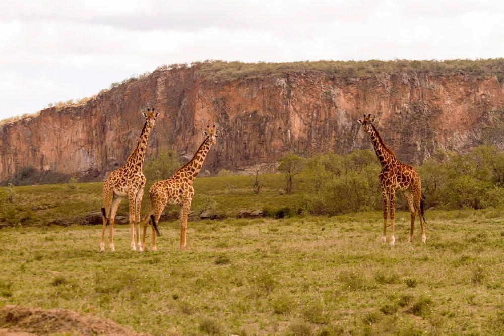 Kenya Wildlife Service park fees