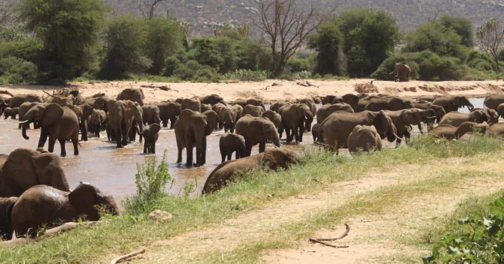 One person suffered injuries on his head and ribs following an elephant attack.