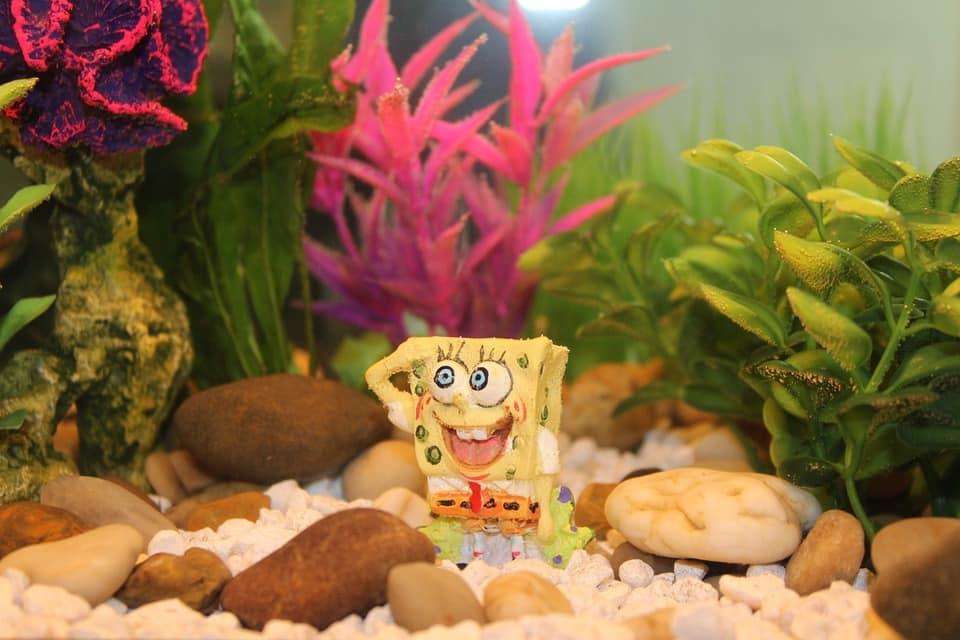 25 Best Memes About Peco: 25 Best Spongebob Memes On The Internet Tuko.co.ke