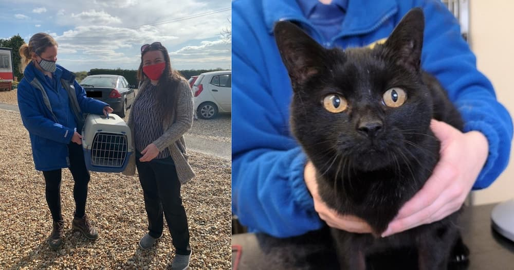 Lost And Found Cat: Norfolk Family Reunites With Missing Cat After 13 Years