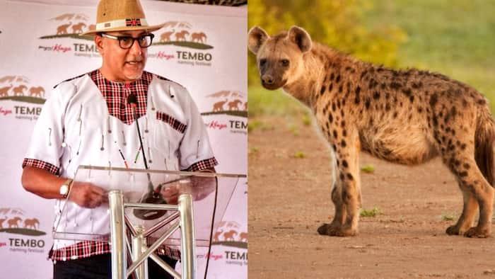 Pay KSh 2m if You Want Hyena Named after You, Najib Balala