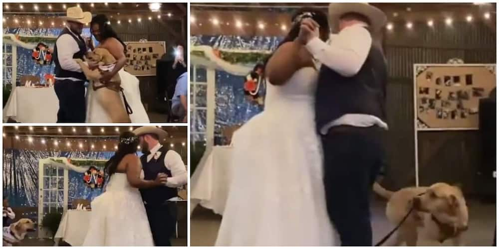 Dog joins newly wedded couple to dance in a cute video, many react