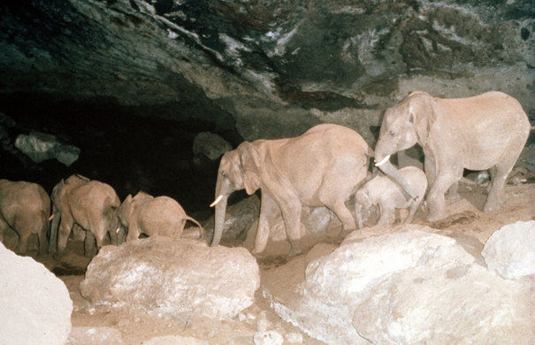 Hidden Mt Elgon caves which elephants use as maternity units