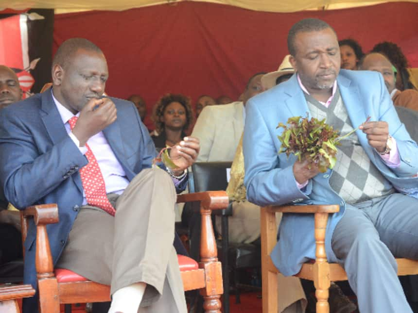 National Cancer Institute links hot tea, mursik, miraa to cancer among Kenyans