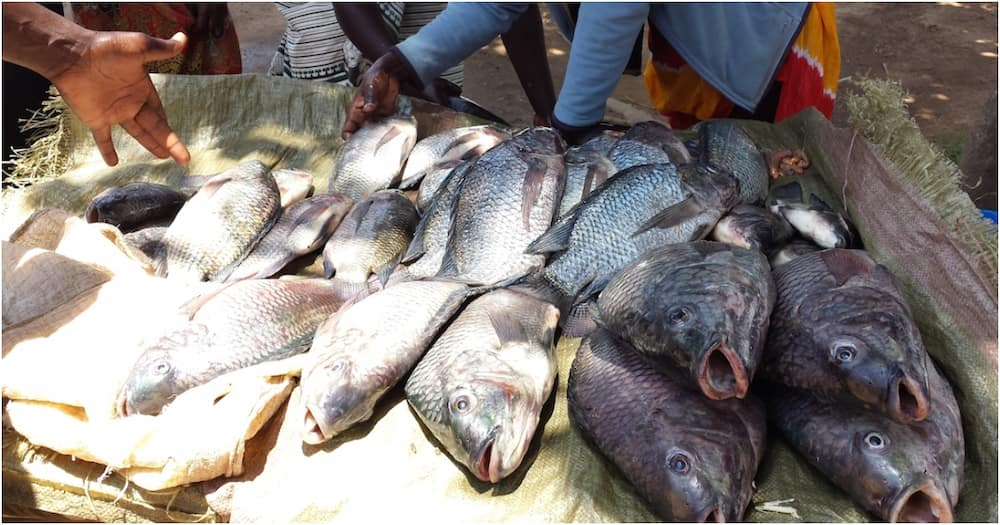 Gov't cautions Kenyans against eating fish from Lake Nakuru