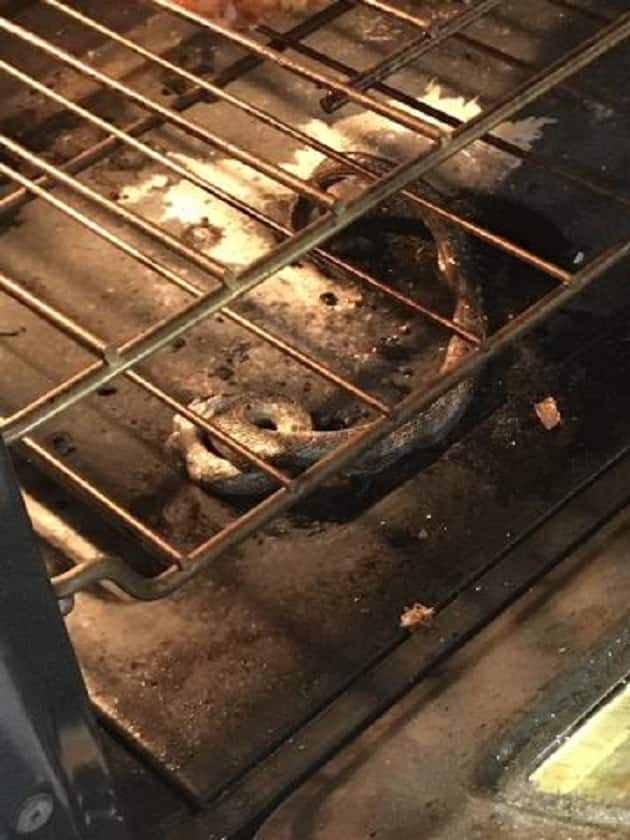 Family burns snake in oven while heating up frozen pizza