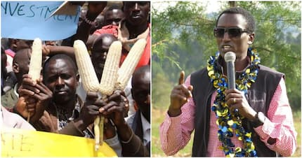 Ruto's ally Buzeki backs farmers' demands for better prices, says government paid more for GMO maize