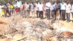 Pokot Magharibi: Zaidi ya Ng'ombe 200 Waangamia baada ya Kula Magugu Ya Sumu