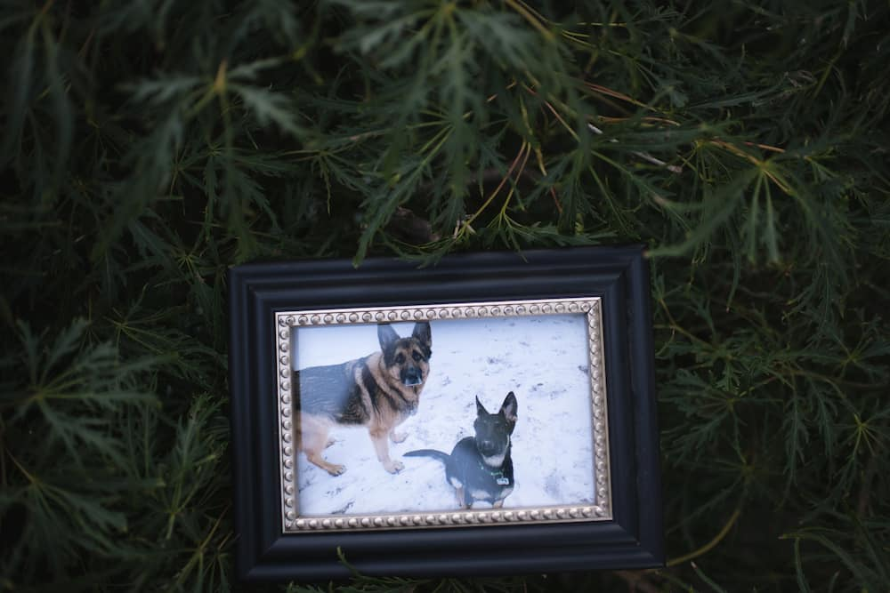 Buddy: First dog to test positive for COVID-19 in the US dies