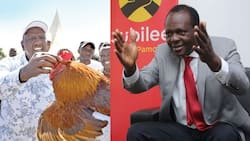 Raphael Tuju Asks Ruto to Show Kenyans KRA Records from His Multi-Million Chicken Business