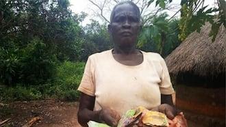 Uganda: Termites Eat Elderly Couple's KSh 48k They Saved In Metallic Case For Three Years