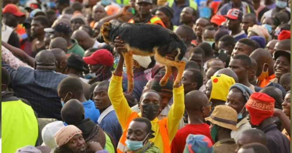 Mwanamume Ambeba Mbwa Wake Kipenzi Kwenye Mkutano wa Simba Arati, Asisimua Wakenya