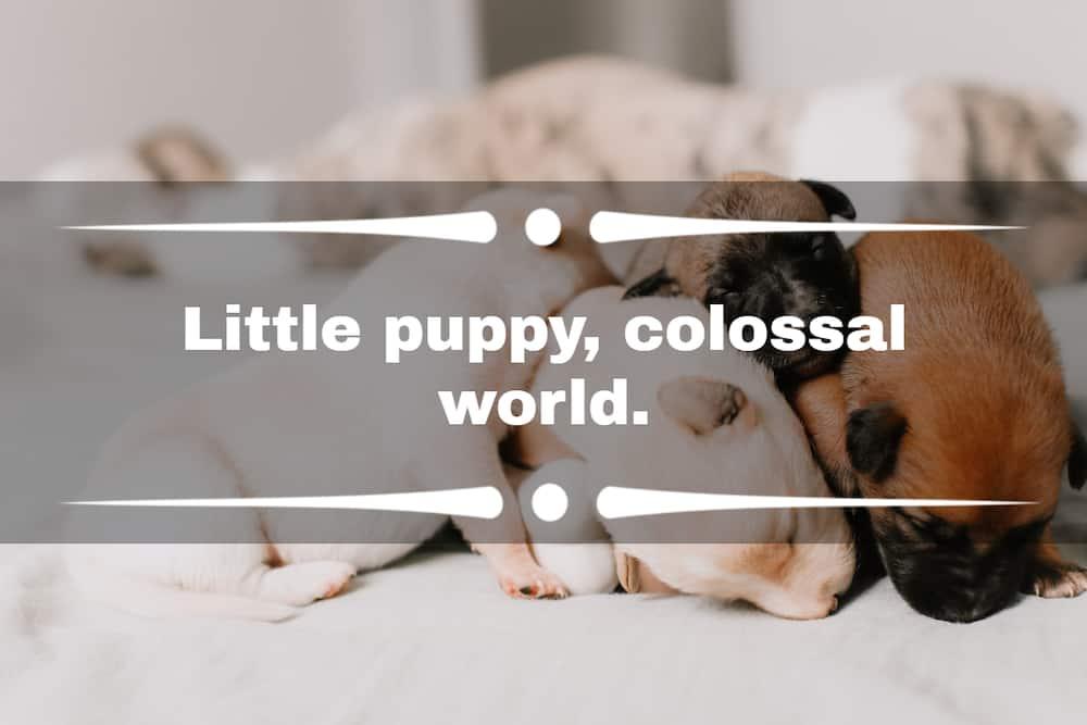 puppy Instagram captions