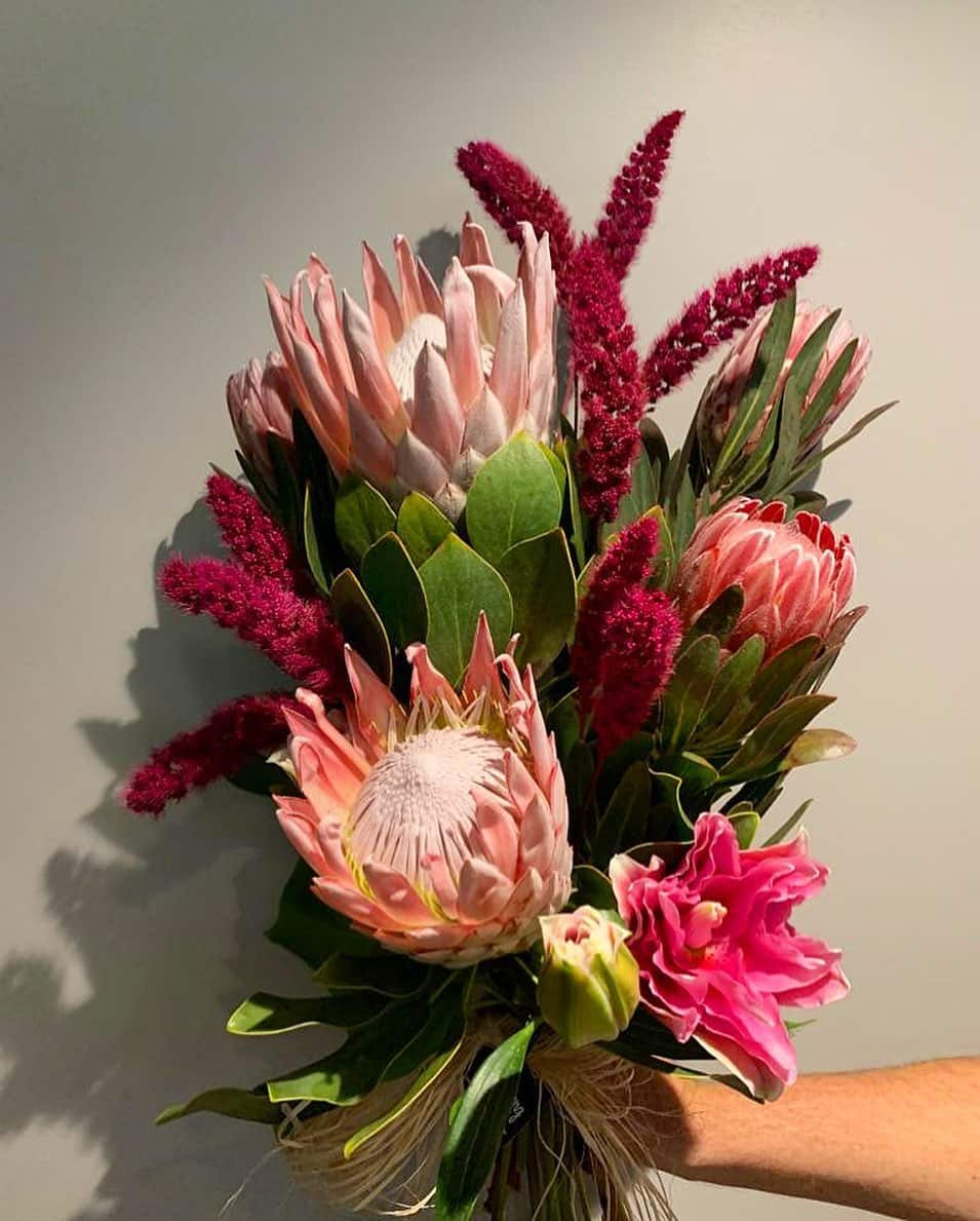 Flowers that are native to Africa