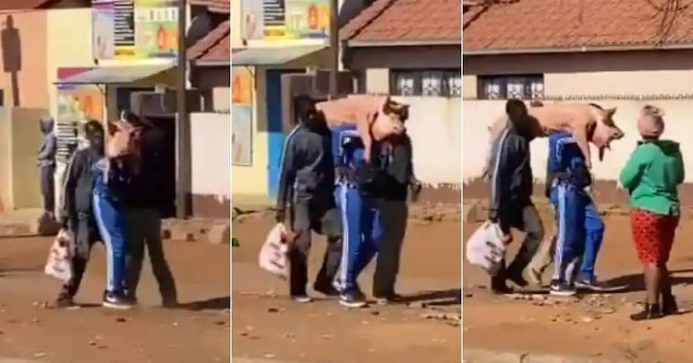 Mzansi people react to a video of 2 men carrying live pig dressed in new clothes after looting.