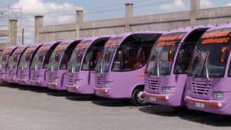 Double M Bus Owner Says Dream of Honouring Late Husband with Hotel Caused Her Frustrations