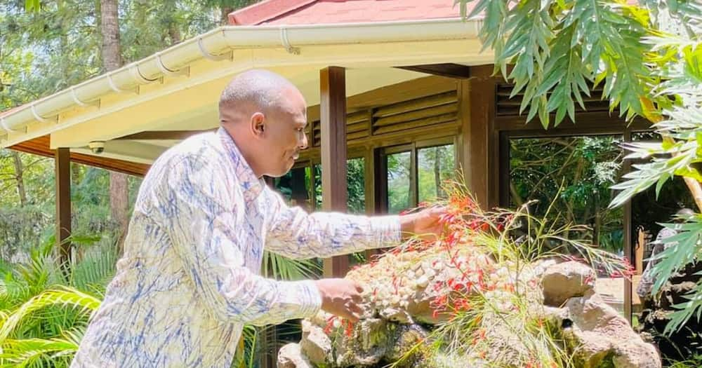 Kikuyu MP Kimani Ichung'wah shows off a fleet of wheelbarrows he owns at his home