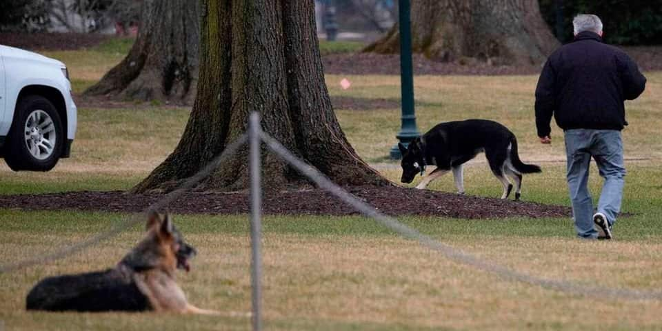Joe Biden's dogs sent out of White House after biting security personnel