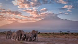 Kenya Wildlife Service Park fees for all National parks in 2021