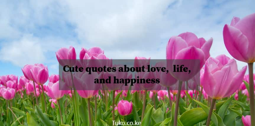 Cute quotes, cute simple quotes, quote about cuteness