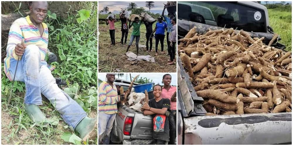 Nigerians react as government official storms farm with his family to harvest cassava.