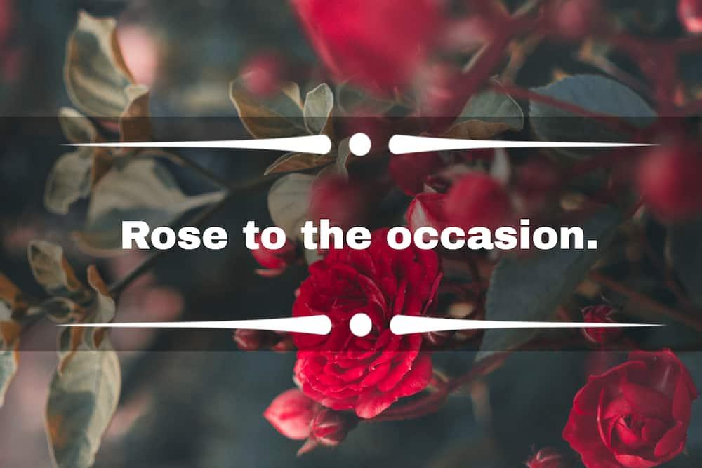 flower captions for Instagram