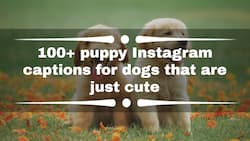 100+ puppy Instagram captions for dogs that are just cute