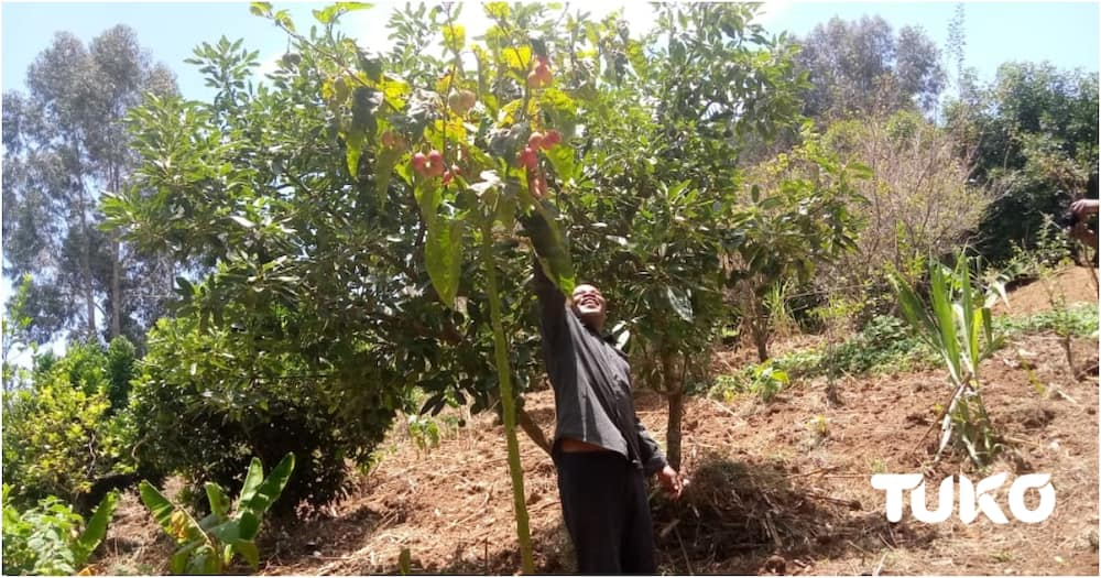 Little known Eburu community embraces fruit farming, use biogas to conserve local forest