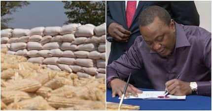Uhuru Kenyatta gives farmers KSh 200 more for 90kgs bag of maize