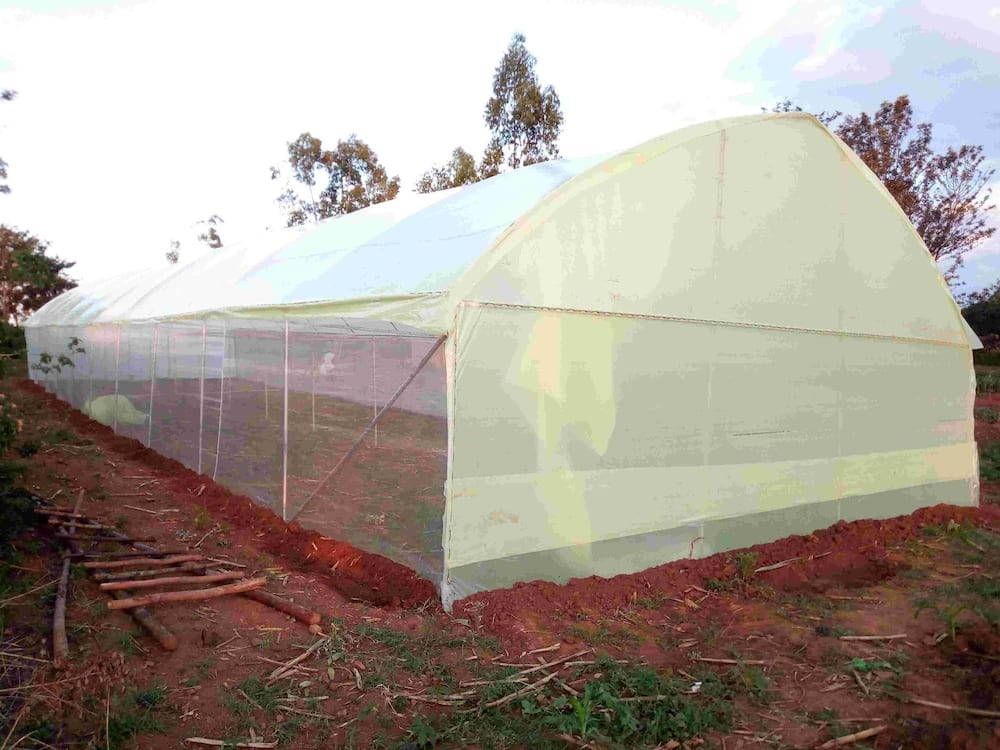 1,500 Kenyans staring at loss of billions in another suspected agribusiness scam