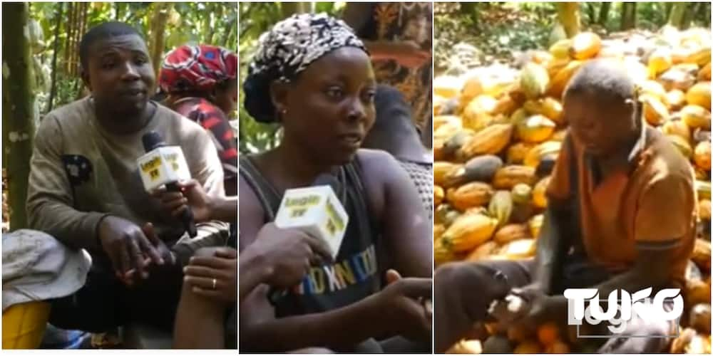Man whose wife endured hardship with him succeeds as cocoa farmer