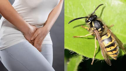 Gynecologist warns women against using wasp nests to tighten vaginas