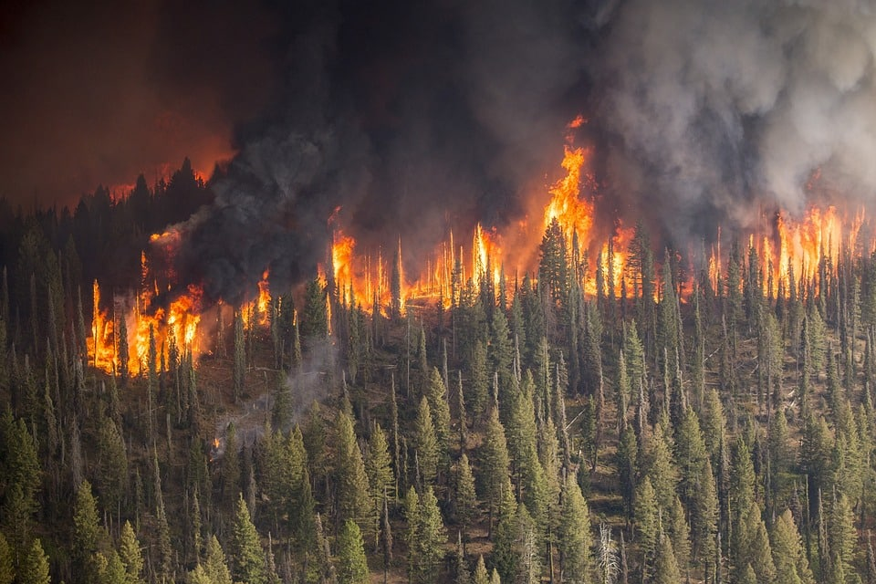 Amazon forest fire disaster