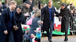 Prince Harry Saves Royal Family a Staggering KSh 740 Million Annually in Security Bills