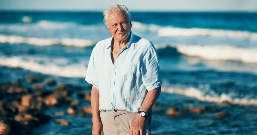 David Attenborough: 94-year-old broadcaster joins Instagram for first time because the world is in trouble