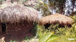 Itumbi: Poverty Pushes Vihiga Man to Live in Circumcised Initiates' Hut Despite Threat of Curse