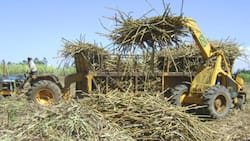 Narok: 6 Cane Cutters Heading to Work Die after Factory Tractor Collides with Canter