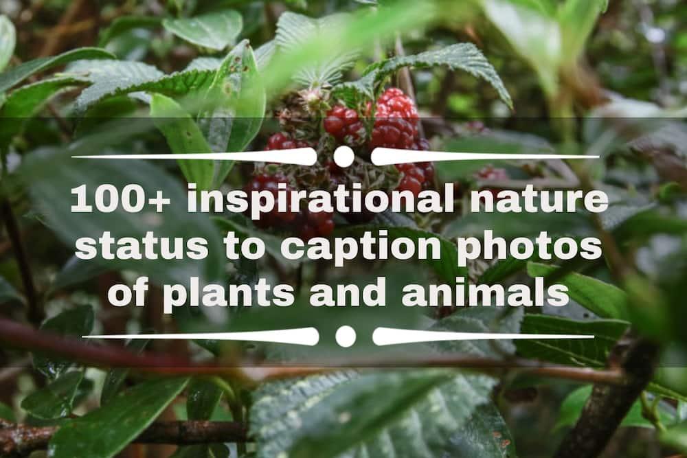nature status