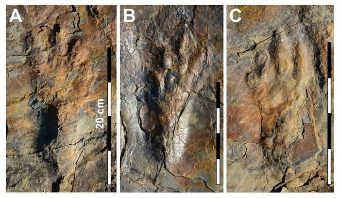 Scientists discover footprints of gigantic 120 million-year-old crocodile that walked like humans