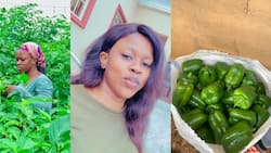 Aunty Morad: Beautiful Young Lady Who Farms for a Living Shows Off Amazing Farm Products