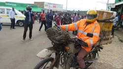 Nairobi: Suspected Thief Abandons Stolen Motorcycle After Being Cornered by Strange Bees