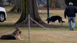 Joe Biden's dogs Champ, Major arrive at new White House home