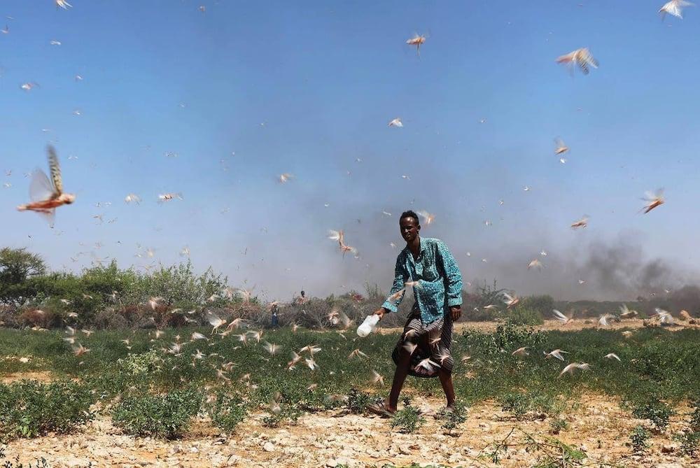 Kilifi bishop says God is punishing Kenya's bad leadership through locusts
